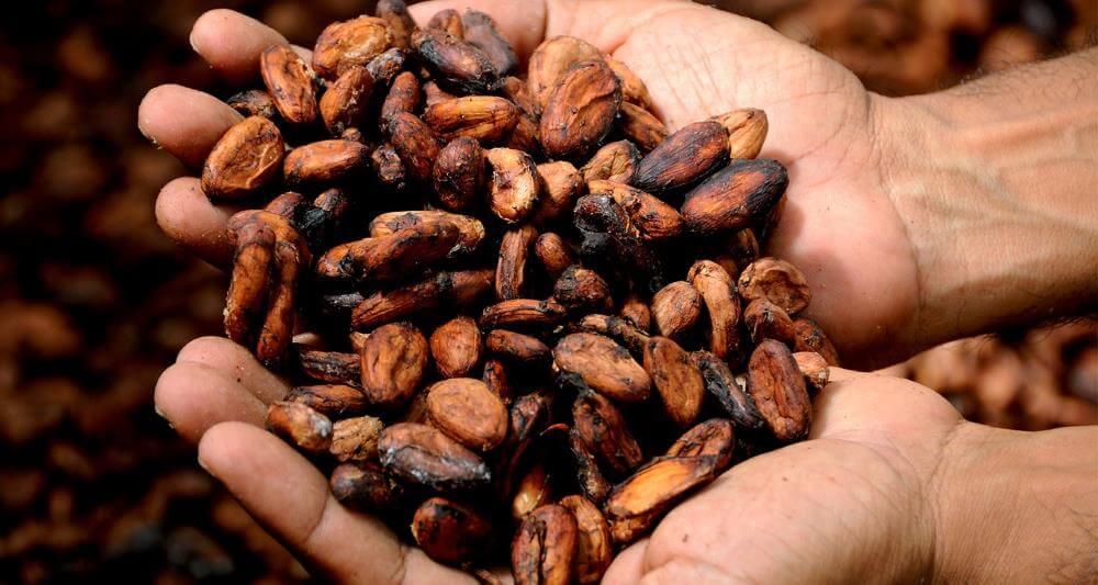 Kakaobohnen wertvoll für die Gesundheit